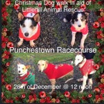 Littlehill dogs feeling festive! Come and meet them on Dec. 28th!